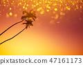 palm, sky, sunset 47161173
