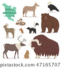 Animal vector animalistic character in forest bear deer elk in America wildlife illustration set of 47165707