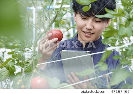 男性聰明的農業房子耕種 47167465