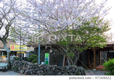 성읍민속마을, 봄, 한옥, 47169822