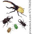昆蟲組裝(大力士甲蟲,甲蟲,雄鹿甲蟲,canabuns) 47170626