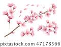 Sakura Realistic Set 47178566