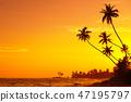 beach, palm, silhouette 47195797