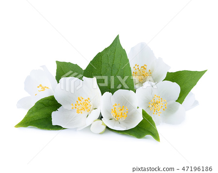 bloom, blossom, flower 47196186