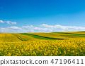 blue, field, green 47196411