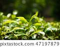 field, green, leaf 47197879