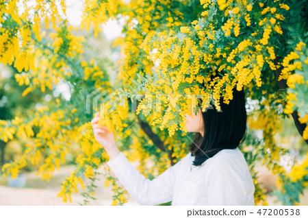 埋在含羞草中的女人 47200538