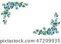 玫瑰 玫瑰花 框架 47209935