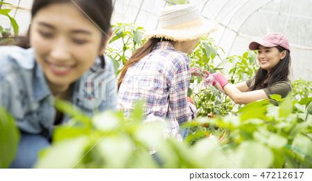 女農業伴侶 47212617