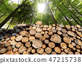 Wooden Logs with pine woodland and sunbeams 47215738