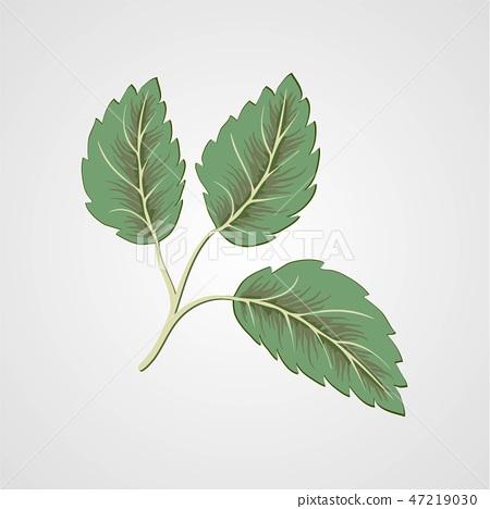 Flying green leaves on white background.  47219030