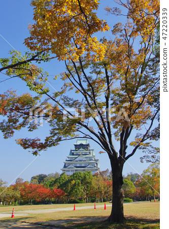 Autumn leaves of Osaka Castle, Osaka City, Osaka Prefecture 47220339
