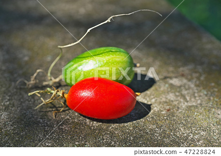 花椰菜的果實 47228824