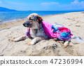 fuzzy dog at the beach 47236994