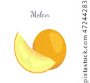 Melon Exotic Juicy Stone Fruit Vector Isolated 47244283