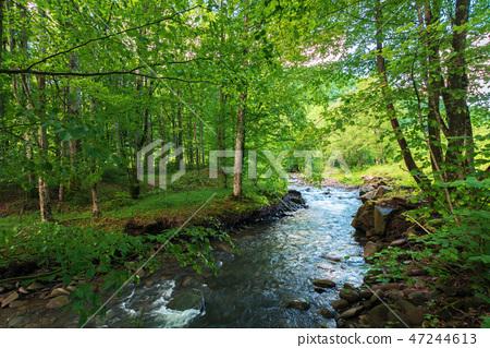 mountain river runs through forest in springtime 47244613