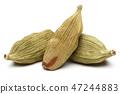 Dry cardamom pods on white background 47244883