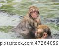 지고 쿠 다니 야생 원숭이 公苑 540 47264059