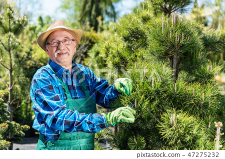 Senior gardener cutting a tree in a garden. 47275232