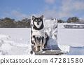 黑清波 積雪 下雪 47281580