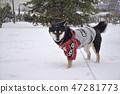 黑清波 凍結的字段 積雪 47281773