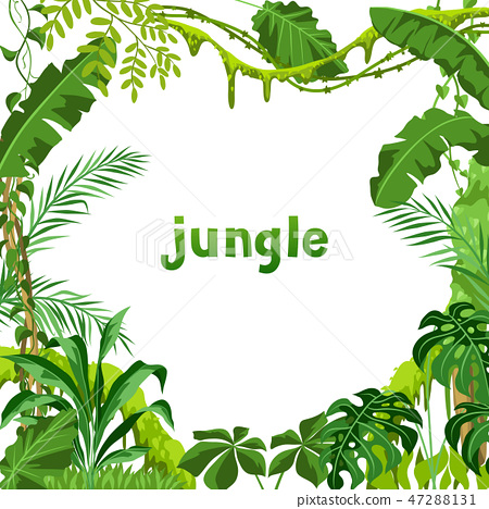 Background with jungle plants. 47288131