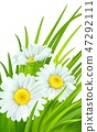 Spring background with daisies and fresh green grass. Vector illustration 47292111