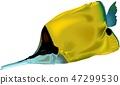 Butterflyfish 47299530