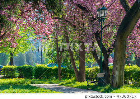 lantern in the park among cherry blossom 47300717
