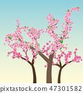 Sakura trees 47301582