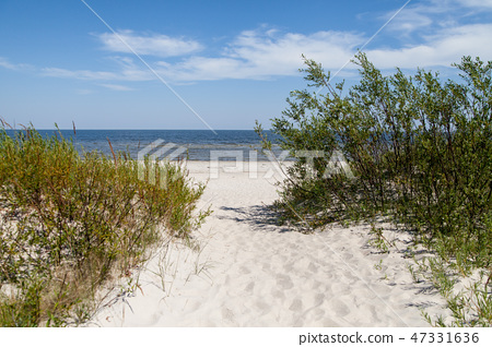 Grass and bushes on a dune. 47331636