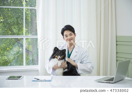 Pet and animal's health care concept veterinarian doctor with stethoscope checking up dog health at clinic. 061 47338002