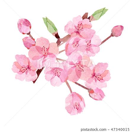 櫻花插圖切 47340015