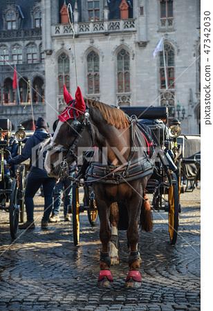 Horse cart in beautiful Bruges town, Belgium 47342030