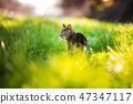 貓步行4 47347117