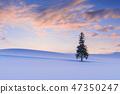 北海道_聖誕樹 47350247