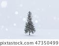 홋카이도 _ 크리스마스 트리 나무 47350499