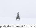 홋카이도 _ 크리스마스 트리 나무 47350512