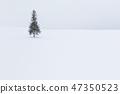 홋카이도 _ 크리스마스 트리 나무 47350523