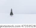 홋카이도 _ 크리스마스 트리 나무 47350528