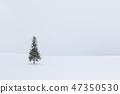 홋카이도 _ 크리스마스 트리 나무 47350530