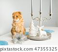 cat, decorations, candles 47355325
