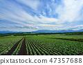 Townscape Landscape Tsumagoi Village Tsumagoi Plateau 47357688