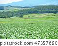 Townscape Landscape Tsumagoi Village Tsumagoi Plateau 47357690