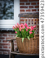 bouquet of pink tulips 47359423
