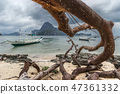 Dead tree over beach with branches on the beach sea after typhoon at cloudy dramatic day in El Nido 47361332
