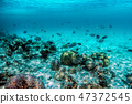 Underwater coral reef and fish in Indian Ocean, Maldives. 47372545