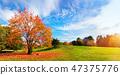 autumn, park, landscape 47375776