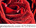 rose, flower, mothers day 47376503