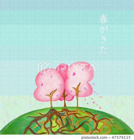 櫻桃樹和根 47379115